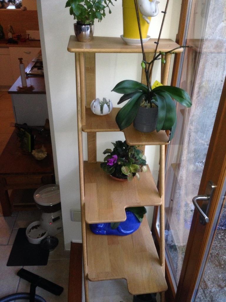 tag re plantes par fsl sur l 39 air du bois. Black Bedroom Furniture Sets. Home Design Ideas