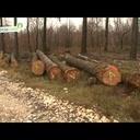 Le cycle de vie du bois