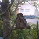 Nichoir à oiseaux amélioré
