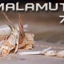 malamute74