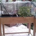 Jardiniere rehaussé d'une mini serre