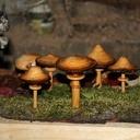Petite cueillette de champignons