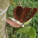 Fabriquer un papillon en bois