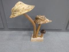 Mangeoire champignons