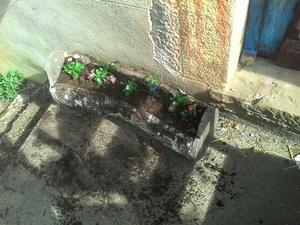 Bac à plante
