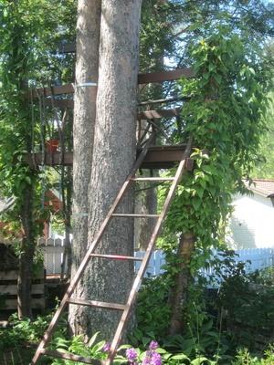 Petit projet d'été: cabane dans les arbres