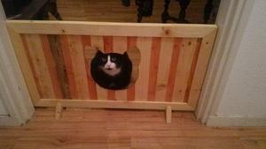 Barrière pour chiens, passage pour chat