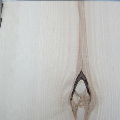 J'ai choisi une photo avec une branche. normalement le bouleau de possède jamais de bande sombre au milieu. La couleur est très uniforme et le bois possède très peu de noeuds. Les fibres sont très rapprochées.