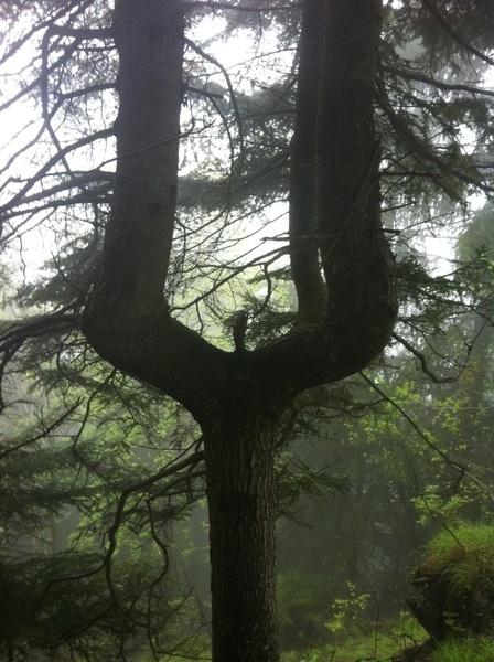 Voilà un arbre qui ne manque pas d'originalité